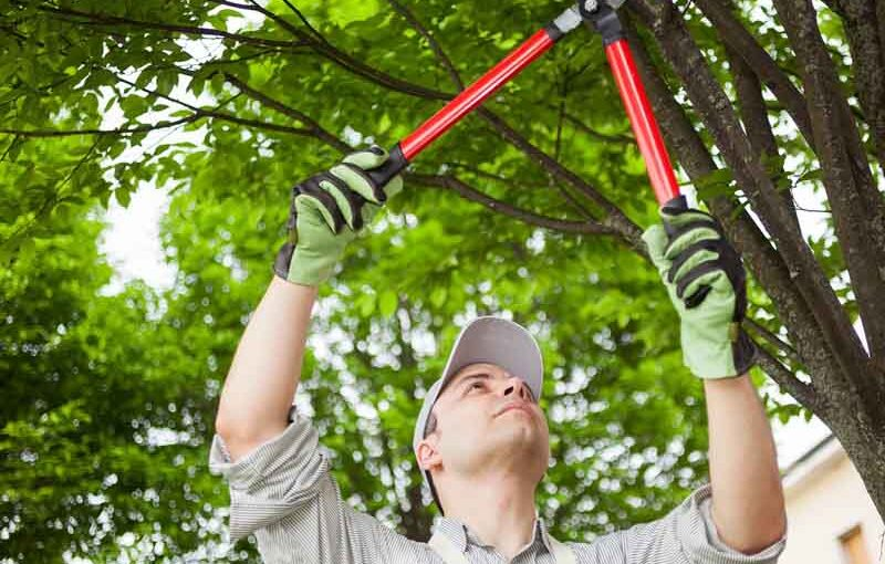 Tree Specialists and Arborist Services