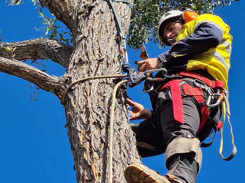 Best tips of tree service and landscaping for your winter garden